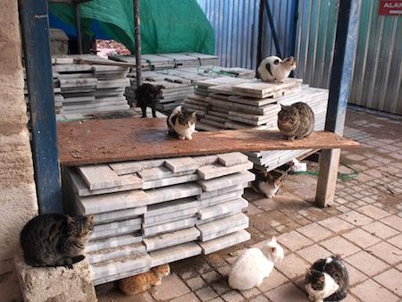 イスタンブールは猫がいっぱい