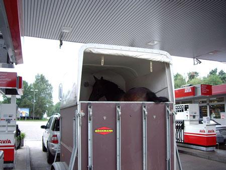 アウトバーンで馬を運ぶ車