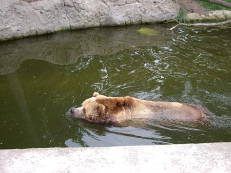 ハーゲンベック動物園の動物は元気が良いです