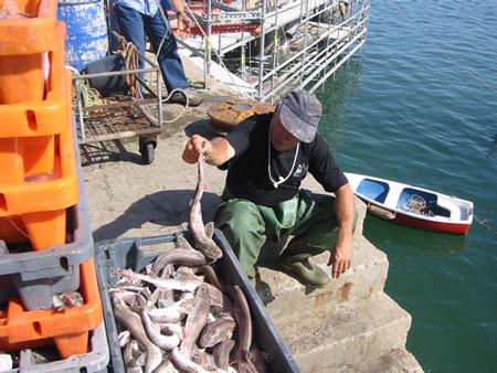 カスカイスの漁師