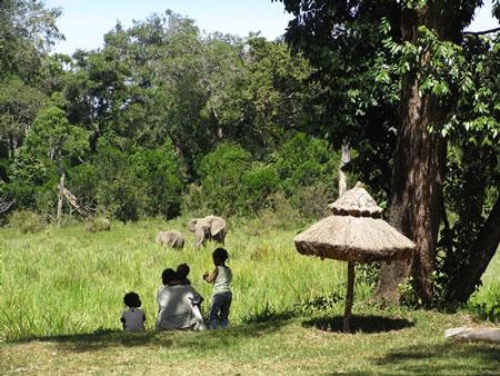 ゾウの家族と人間の家族