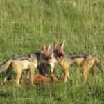 ケニア旅行の写真色々な動物編その2