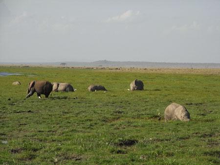 湿地帯のゾウ達