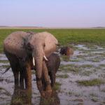 ケニアサファリ旅行目次