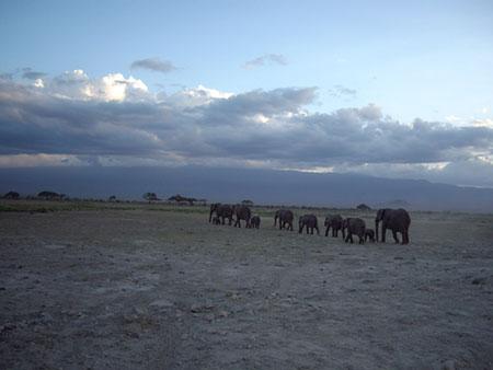 夕暮れに家路に着くゾウの家族