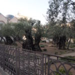 ゲッセマネの園