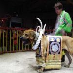 土佐犬の闘犬