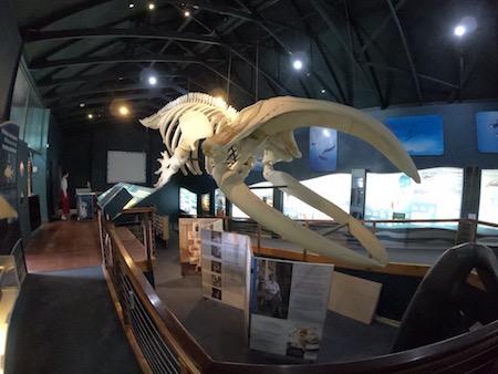 クジラの骨組み