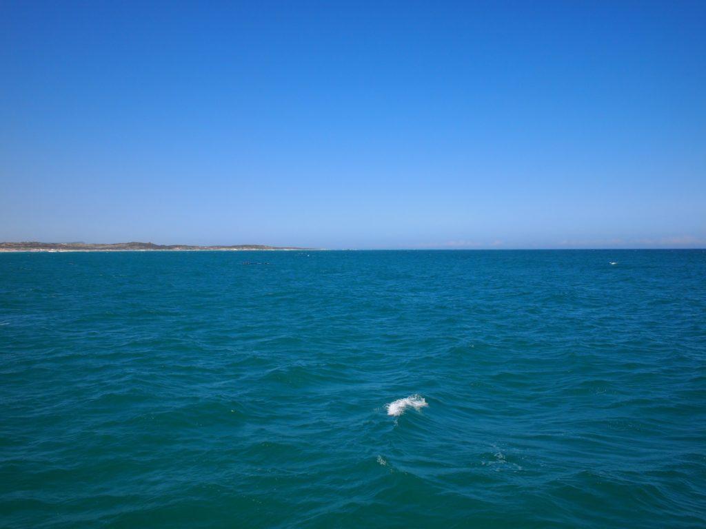 ちょっと遠いけど・・クジラ発見