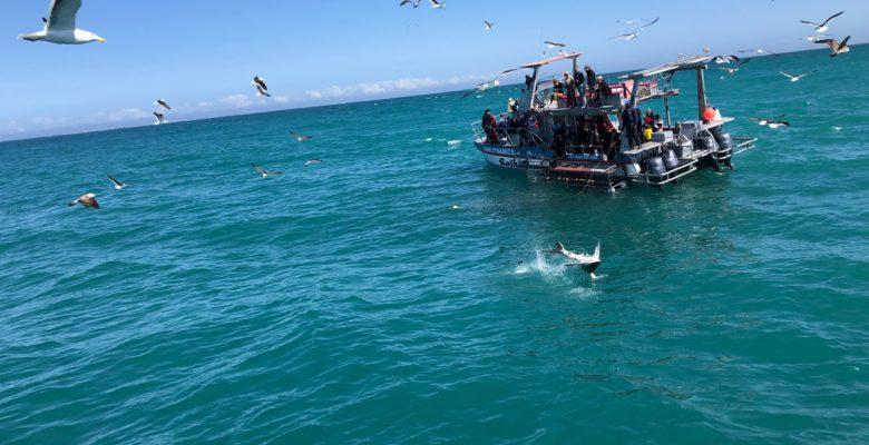 おおサメのジャンプ!貴重な瞬間!