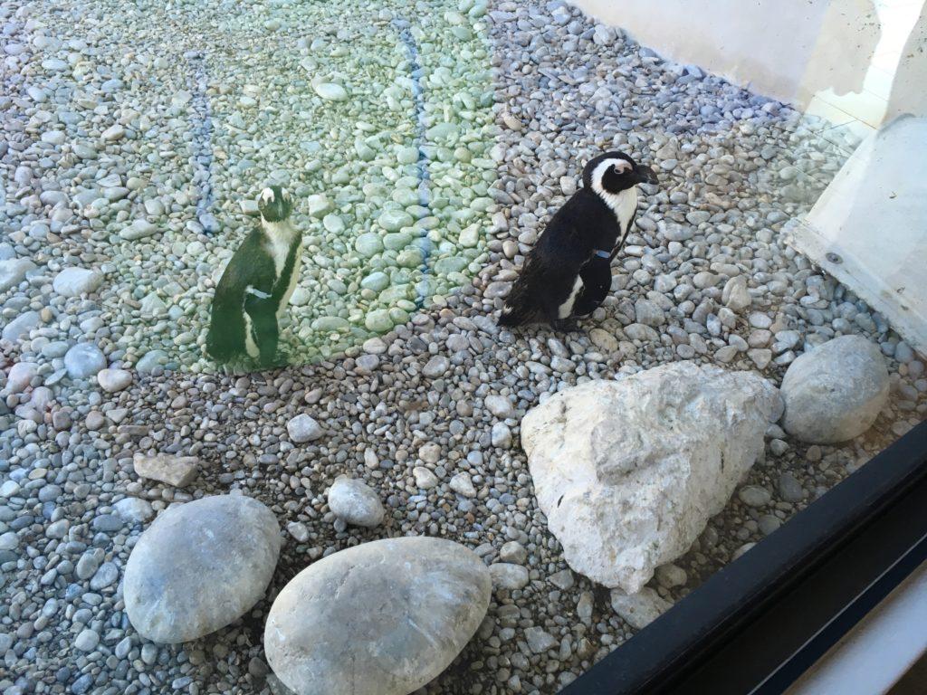 ペンギン保護施設