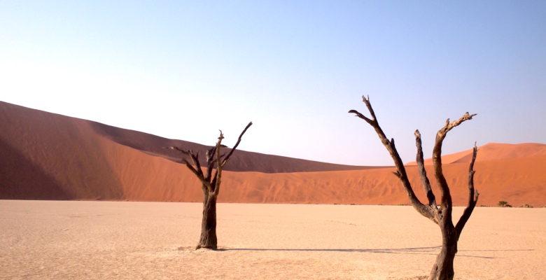 干からびた沼、枯れた木、砂丘