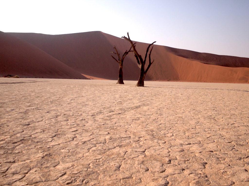 あの砂丘のてっぺんから駆け下りました