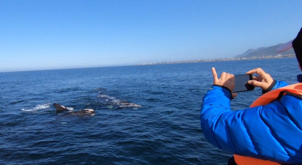 南セミクジラ