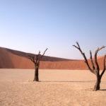 南アフリカ・ナミビア旅行の写真 ナミブ砂漠編